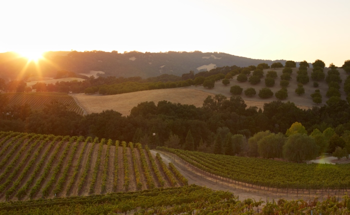 Understanding Regions: Paso Robles East